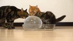 Ballon Mit Mehl Füllen : sie f llen einen ballon mit wasser und geben ihn ihren katzen das resultat zu lustig ~ Markanthonyermac.com Haus und Dekorationen