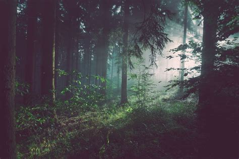 Foggy Evergreen Forest Wallpaper Living Near A Forest Is Linked To Better Brain Health Pacific Standard
