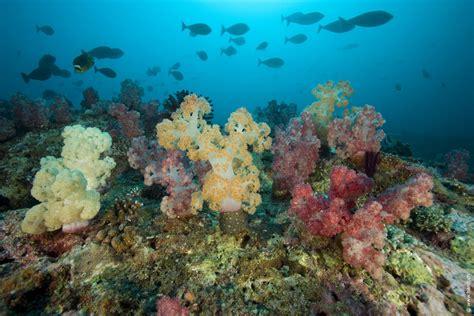 Lombok Dive Resort Diving Villa Almarik Villa Almarik