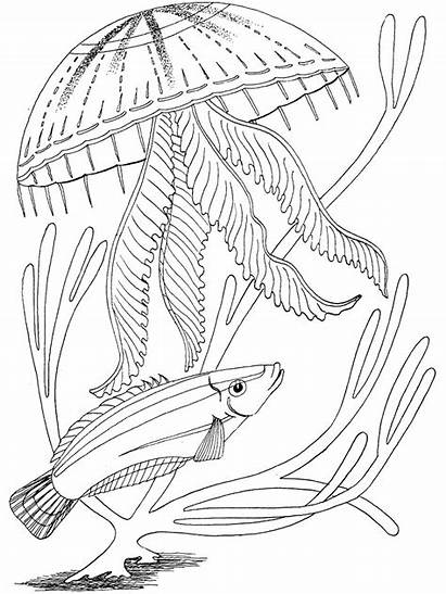 Coloring Ocean Pages Fish Adult Printable Animals