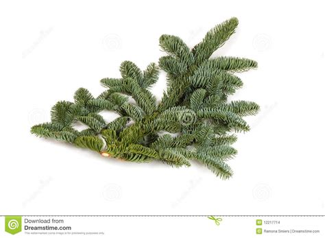 bare twig from christmas tree stock photo image 12217714