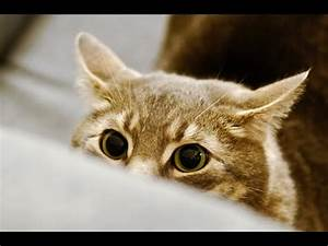 Funny Stalking Cat Video Compilation 2014 [HD] - YouTube