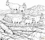 Coloring Goat Mountain Herd Goats Drawing Mountains Printable Rocky Realistic Snake Colouring Animal Animals Adult Clipart Hills Adults Drawings Bird sketch template