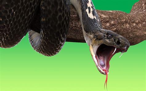 ontario snakes snake facts behaviour terminix canada