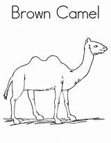 Camel Coloring Pages Printable Brown Sally Template Outline Getcoloringpages Popular sketch template