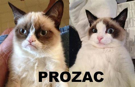 Memes Of Grumpy Cat - grumpy cat meme some pets