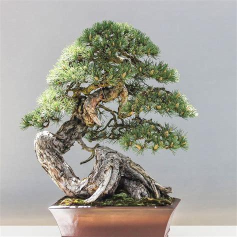 Baum Pflege by Bonsai Baum Schneiden Garten Bonsai Baum Pflanzen Pflegen
