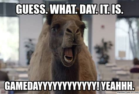 Hump Day Meme Hump Day Meme Camel Www Imgkid The Image Kid Has It