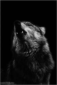 .:Black Howl:. by WhiteSpiritWolf on DeviantArt
