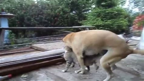 video lustige tier paarung die welt tier paarung youtube