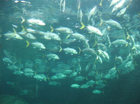aquarium boulogne sur mer boulogne sur mer aquarium images