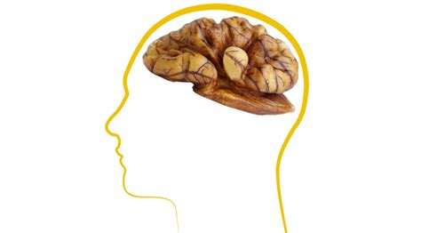 walnut resembles  brain  dr fatemeh aghanasiri