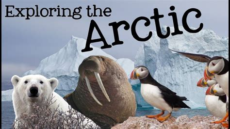exploring  arctic  kids arctic animals  climates