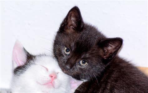 kostenlose foto katzenbabys baby katzen schwarz