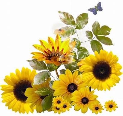 Daisy Aesthetic Clipart Sunflower Transparent Clip Flowers