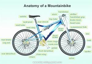 Components Of A Mountain Bike  Source   Bike