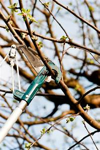 Apfelbaum Für Balkon : winterschnitt beim apfelbaum das sollten sie beachten ~ Michelbontemps.com Haus und Dekorationen