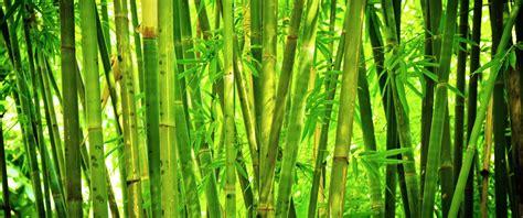 Bamboo Milk Hair Care - Stronger Natural Black Hair - Dark