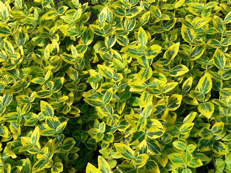 listino prezzi piante da giardino produzione ferrario vivai