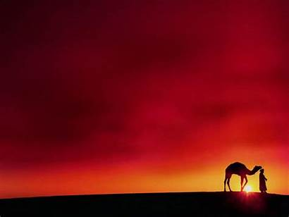 Desert Camel Powerpoint Rajasthan Wallpapers Background Backgrounds