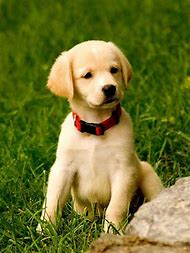 Cute Dogs and Puppies Wallpaper