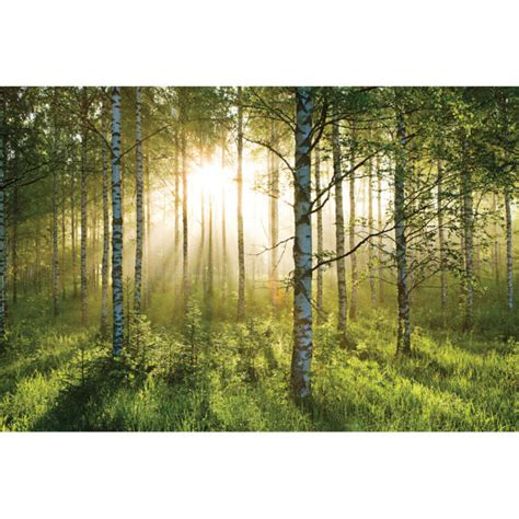 Forest Scene Wall Mural Iwoot