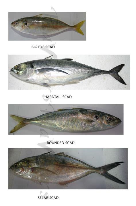 confused  fish names  treasure house  recipes