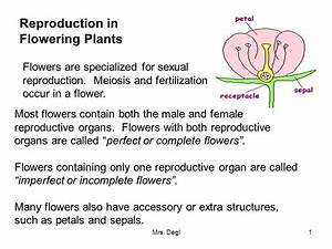 The Male Organ Of A Flower Is The - Flowers Ideas For Review