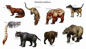 Omnivores Animals Chart