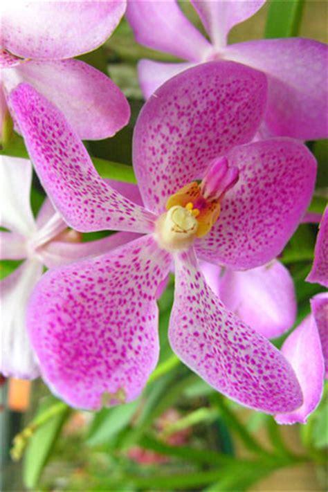 butterfly farm  orchid garden