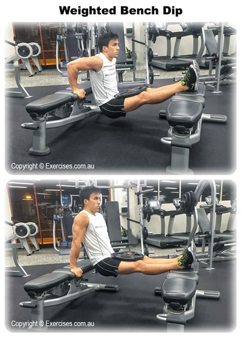 weighted bench dip weighted bench dip exercises au