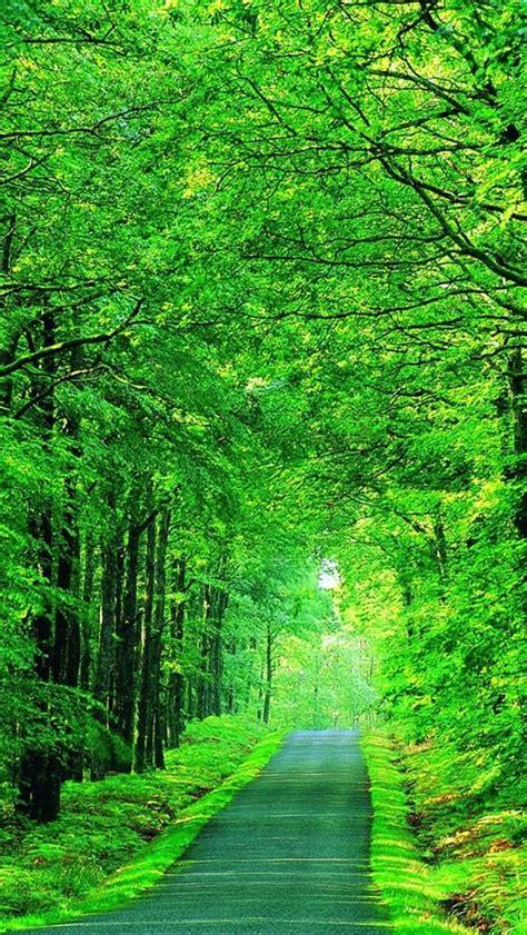Wallpaper Green Nature Hd Impremedianet