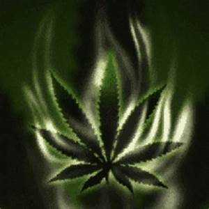 mariguana weed