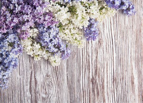 lilac flowers  wood background branch  wooden texture