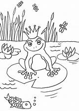 Frog Coloring Easy Tulamama sketch template