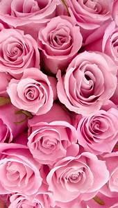 Pink Roses iPhone 5 Wallpaper   iPhone Wallpaper ...