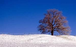 Widescreen Winter wallpaper - 10073