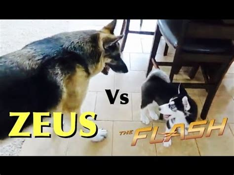 zeus  flash romanatwood youtube