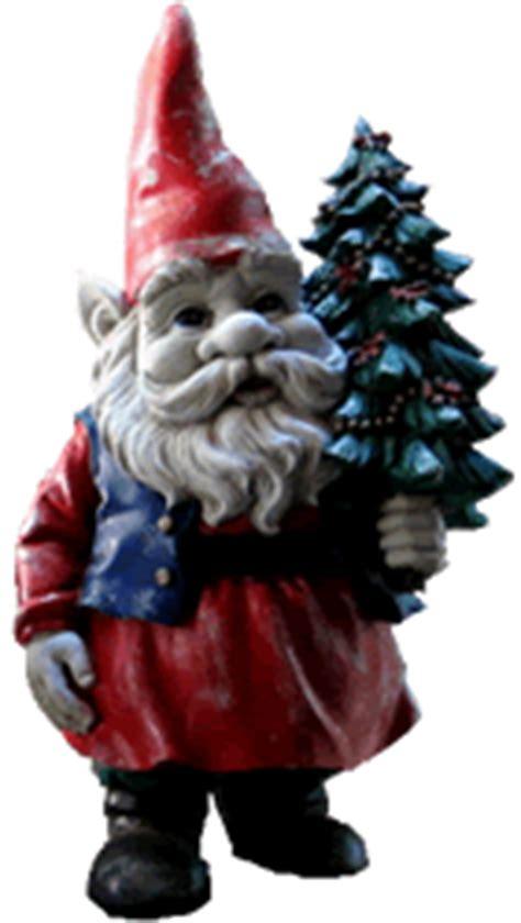 christmas trees   choose  living christmas tree