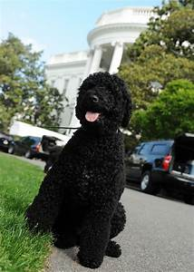 Barack Obama's pet dog 'bites guest at White House ...