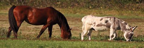 companion horses animals equinefacilitydesign