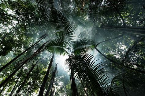 amazon deforestation rainforest usa solutions forest greenpeace forests brazil damning