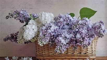 Lilac Basket Desktop Vividscreen Info