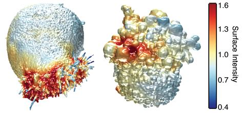 Seeing Cancer Cells In 3-d (w/ Video