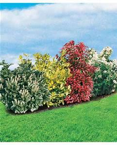 Quels Arbustes Pour Une Haie : la 39 haie persistante 39 4 arbustes willemse ~ Premium-room.com Idées de Décoration