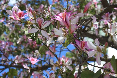 san diego flowers san diego atlanta florist delivery