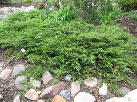 groundwrx juniper calgary carpet