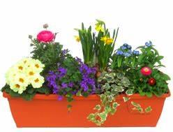 Balkonpflanzen Herbst Winter : balkonpflanzen kaufen pflanzen sets fr hjahr sommer herbst winter ~ Sanjose-hotels-ca.com Haus und Dekorationen