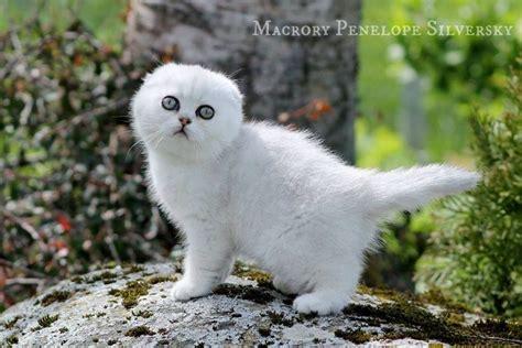 Ostan kassipoja