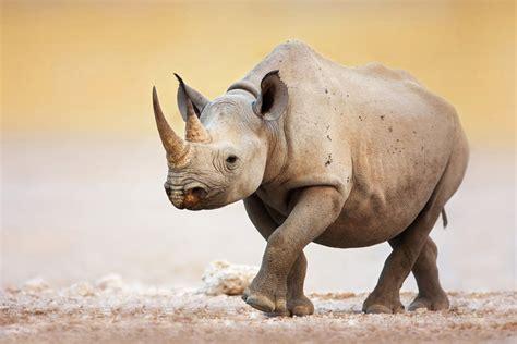 Nature Endangered Species